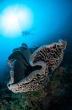 Den jätte- svampen (den Petrosia lignosaen) är infödd till Gorontalo, Indonesien Arkivfoton