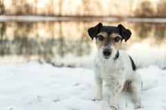 Den Jack Russell Terrier hunden sitter i snön på en sjö i vinter royaltyfri foto