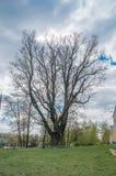 Den Jagiello eken i Deblin, Polen 20 april 2017 Royaltyfria Foton