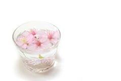 Den japanska körsbärsröda blomningen blommar i exponeringsglaset av vatten #2 Arkivbild