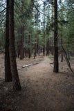 Den Jeffrey Pine Trees skogen på den kolossala sceniska öglasvägen i kolossala sjöar, Kalifornien längs de Inyo kraterna skuggar royaltyfria foton