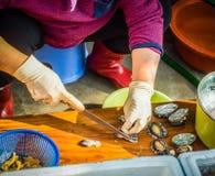 Den Jeju kvinnan förbereder rå skaldjur för att tjäna som till hennes kund Royaltyfri Bild