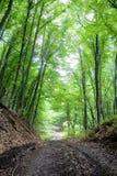 Den jord- vägen i en tät skog Royaltyfria Foton