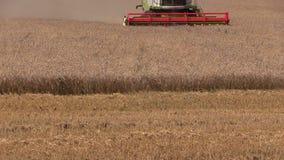 Den jordbruks- sammanslutningen besegrar vetefältet lager videofilmer