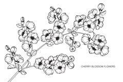 Den körsbärsröda blomningen blommar teckningen och skissar med linje-konst Royaltyfria Bilder