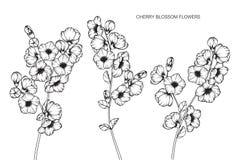 Den körsbärsröda blomningen blommar teckningen och skissar med linje-konst på vit Royaltyfri Bild