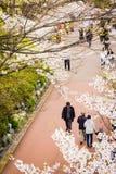 Den körsbärsröda blomningen längs sjösidan parkerar av Lotte World Magic Island fotografering för bildbyråer