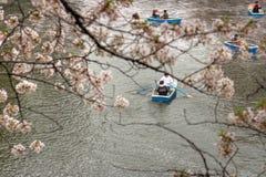Den körsbärsröda blomningen parkerar Arkivbild