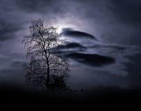 Den kala treen i dimmigt landskap Royaltyfri Fotografi