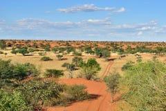 Den Kalahari öknen, Namibia Arkivbilder