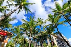 Den Kalakaua avenyn som fodras med, gömma i handflatan kokospalmer i Honolulu royaltyfri foto