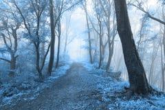 Den kalla dimmiga skogen gillar en saga Arkivbilder