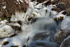 In den kalten Flüssen der Altai-Berge des Spätherbsts im Trinkwasser sehr Stockbild