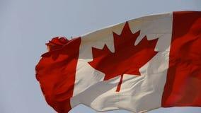 Den Kanada flaggan fladdrar i vind arkivfilmer