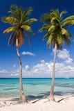 den karibiska stranden gömma i handflatan tropiska havstrees Arkivfoto