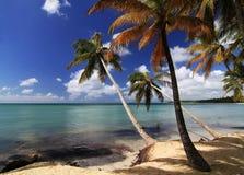 Den karibiska stranden med mycket gömma i handflatan Arkivfoton