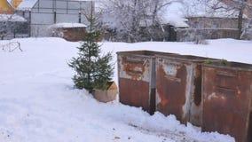 Den kasserade julgranen efter det nya året på avfallet, vinter, häftig snöstorm arkivfilmer