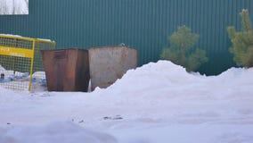 Den kasserade julgranen efter det nya året på avfallet, vinter, häftig snöstorm stock video