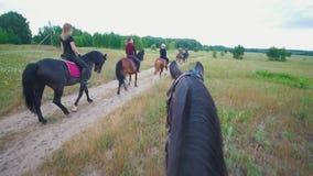 Den kastanjebruna hästen följer till gruppen av ryttare på hästryggridning på fältet lager videofilmer