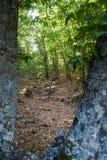 Den kastanjebruna skogen med flera täcker från olika punkter av tävlar Arkivfoto
