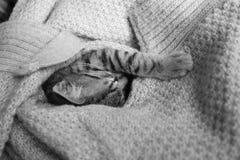 Den keliga katten sover Arkivbild