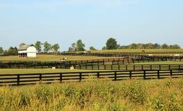 Den Kentucky hästen parkerar royaltyfri fotografi