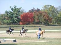 Den Kentucky hästen parkerar Arkivfoto