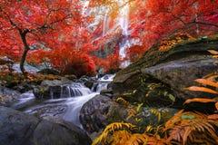 Den Khlong LAN-vattenfallet är härliga vattenfall i regnskogdjungeln Thailand royaltyfri foto