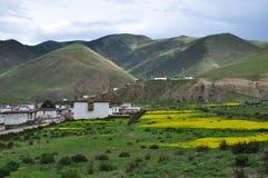 Den Kina Tibet Zuogong byn våldtar blommor Royaltyfri Foto