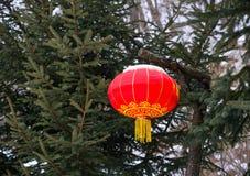 Den kinesiska röda lyktan som hänger på, sörjer träd royaltyfri foto
