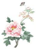 Den kinesiska traditionella distingerade ursnygga dekorativa hand-målade färgpulverpionen blommar Royaltyfri Foto