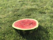 Den klippta vattenmelon på din saftiga gräsmatta fotografering för bildbyråer