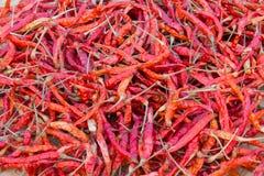 Den kombinerade röda torkade chilibakgrunden Royaltyfri Foto