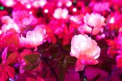 Den konstgjorda rosa färgblomman har lett ljus i den Royaltyfria Foton