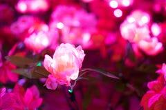Den konstgjorda rosa färgblomman har lett ljus i den Arkivfoto
