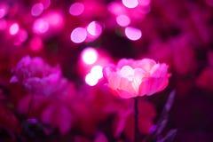 Den konstgjorda rosa färgblomman har lett ljus i den Arkivbild