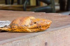 Den Kopf der Pythonschlange auf dem Tisch anfüllen Lizenzfreies Stockbild