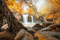 Den kraftiga vattenfallet som omges av träd och, vaggar Arkivbild