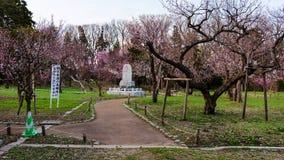 Den körsbärsröda blomningen och klosterbroderstatyn på Maruyama parkerar Arkivbild