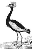 Den kungliga fågeln vektor illustrationer
