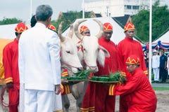 Den kungliga ploga ceremonin i Thailand Royaltyfria Bilder