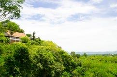 Den kungliga ställemitten av skogen på det Thailand landet Arkivfoton