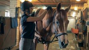 Den kvinnliga anfallaren borstar upp man för häst` s, slut stock video