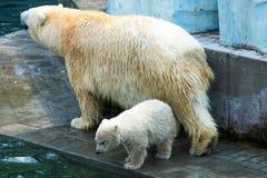 Den kvinnliga björnen med behandla som ett barn björnen Arkivfoton