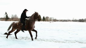 Den kvinnliga cowboyen rider en häst på en galopp Royaltyfri Foto