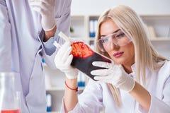 Den kvinnliga doktorn för kvinna som ser blodprövkopior i påse arkivbilder