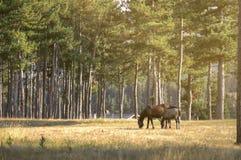 Den kvinnliga hästen med henne behandla som ett barn Arkivbilder
