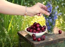 Den kvinnliga handen gör en bukett från lila lösa blommor och en platta av den söta körsbäret på en bakgrund arkivbild