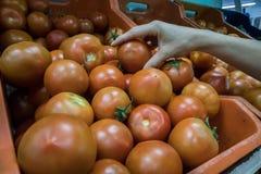 Den kvinnliga handen når en höjdpunkt tomater i supermarket royaltyfria bilder