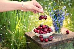 Den kvinnliga handen rymmer de läckra körsbärsröda berrysna och en platta av den söta körsbäret och en bukett av lila färger på e royaltyfria bilder